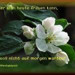 Birnenblüte H