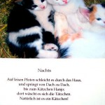Fotogedicht Kätzchen