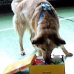 Hund 2. Schachtel