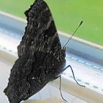 Lesevor 11 Schmetterling